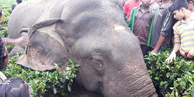 Four wild elephants die from shoddy electrical wires in India