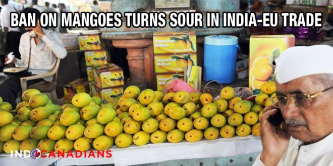 Ban on mangoes turns sour in India-EU trade