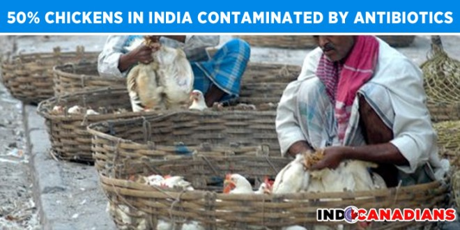 50% Chickens in India contaminated by antibiotics, says study by CSE