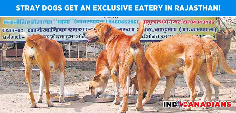 Stray dogs get an exclusive eatery in Rajasthan!