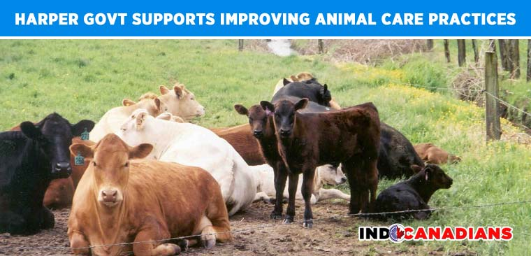 Harper Government Supports Improving Animal Care Practices