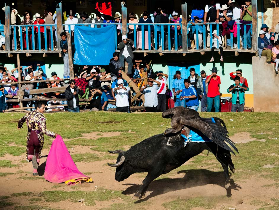 A bullfighter runs from a charging bull with a condor pecking at its back in Cotabambas.