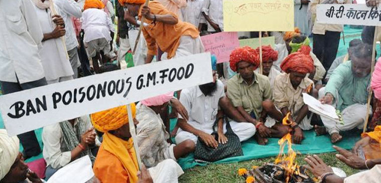 Setback for environmentalists as India okays GM crops