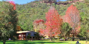 Children drugged, tortured at Indian Yoga ashram in Australia