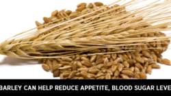 Barley can help reduce appetite, blood sugar level